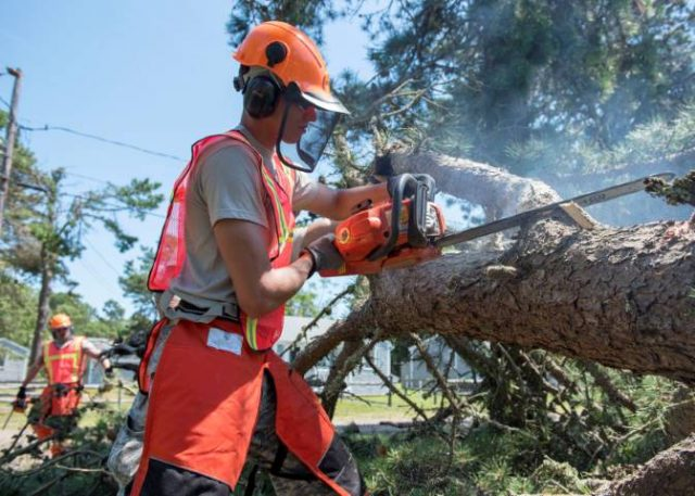 man with chainsaw cutting a fallen tree