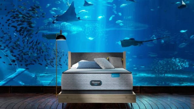 spend the night alone under the sea and go private shark diving